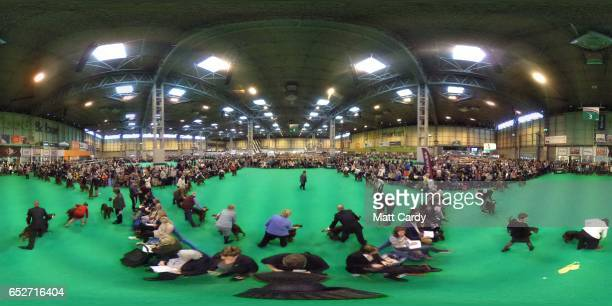 Dogs are judged on the final day of the Crufts Dog Show at the NEC Arena on March 12 2017 in Birmingham England First held in 1891 Crufts is said to...