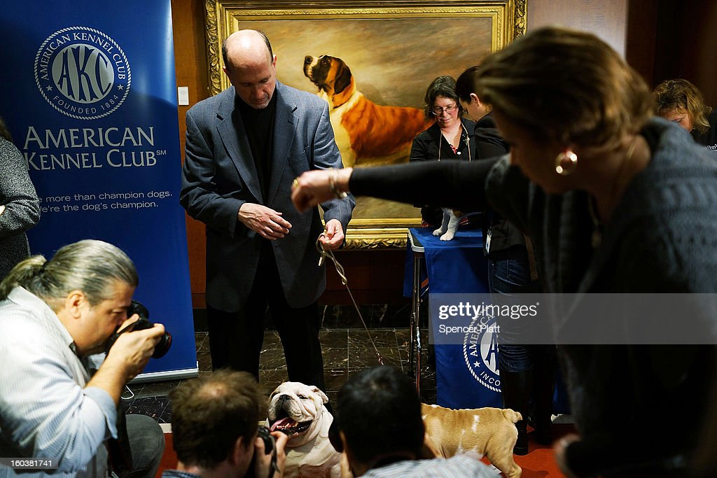 Dogs are photographed by the media following a news conference by the American Kennel Club to discuss the release of the club's annual list of the most popular dog breeds in the U.S., on January 30, 2013 in New York City. The club says that for the 22nd straight year the Labrador Retriever is the nation's most popular dog followed by the the German Shepherd.