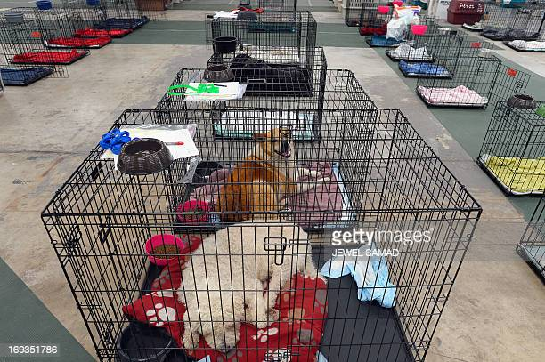 Dogs are seen in cages at an animal shelter for tornadodisplaced pets on May 23 2013 in Moore Oklahoma Monday's tornado in this Oklahoma City suburb...
