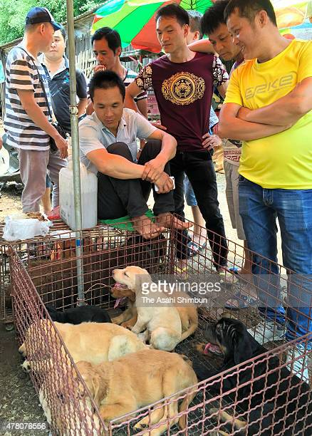 Dogs are sold at a market a day before the annual dog meat festival on June 21 2015 in Yulin China