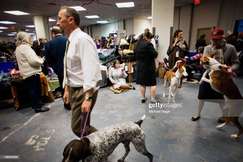 Dogs are walked backstage at Westminster Kennel Club Dog Show on February 13, 2012 in New York City. The Westminster Kennel Club Dog Show first held in 1877, is the second-longest continuously held sporting event in the U.S., second only to the Kentucky Derby.