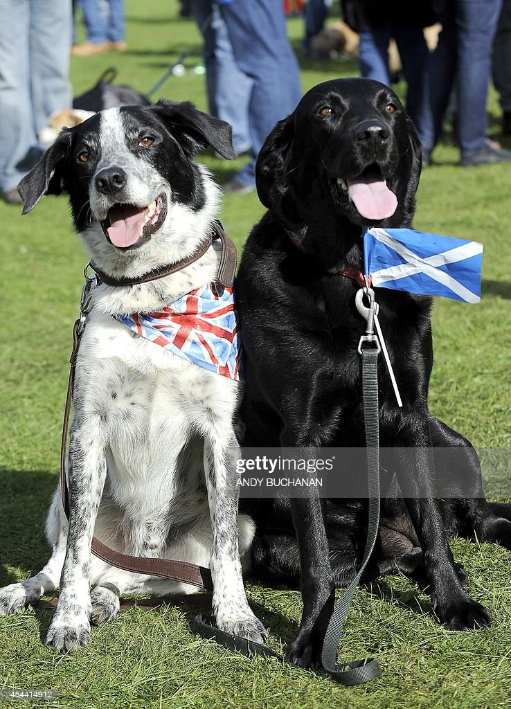 Dogs Asbo wearing a union flag and Millie wearing a Scottish flag are pictured at the 150th Birnam Highland Games in Perthshire Scotland on August 30...