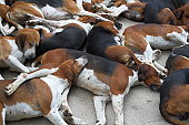 Dogs asleep