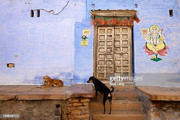 Dogs at wall