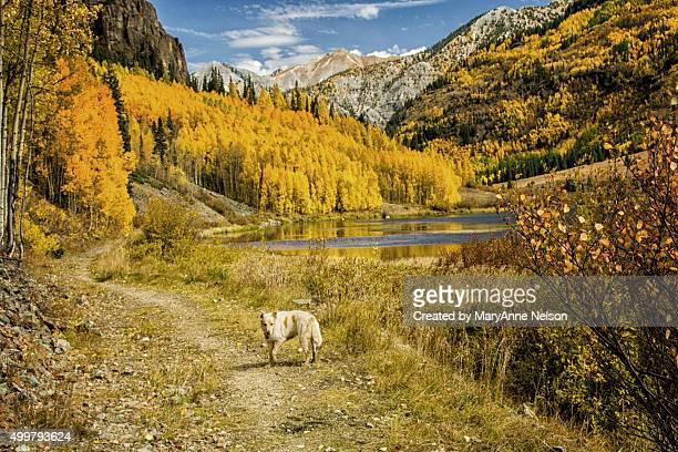 Dog's Autumn Walk in Mountains