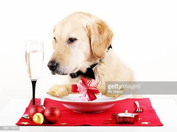 Hunde-Abendessen