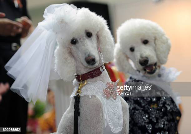 Dogs dress as a 'wedding couple' pose for photos during a pets show in Taipei on July 16 2010 More then three hundred and fifty booths from 105...