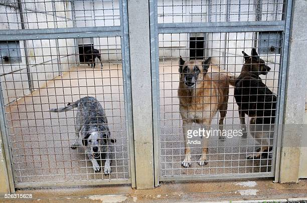 Dogs for adoption confined in a cage in a refuge of the RSPCA / ASPCA