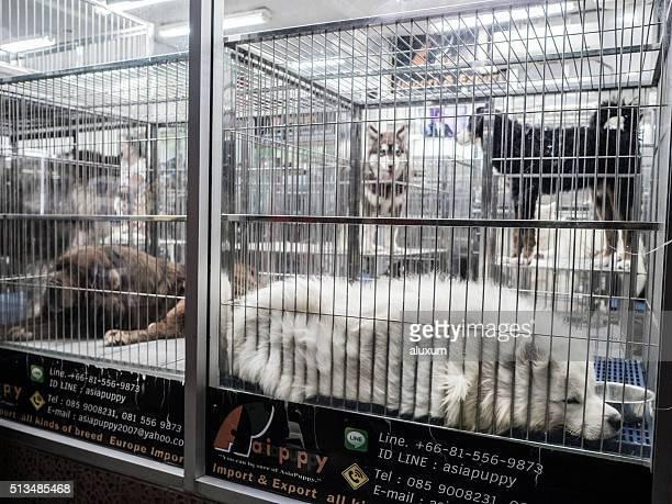 Cães para venda no mercado, Banguecoque, Tailândia Chatuchak