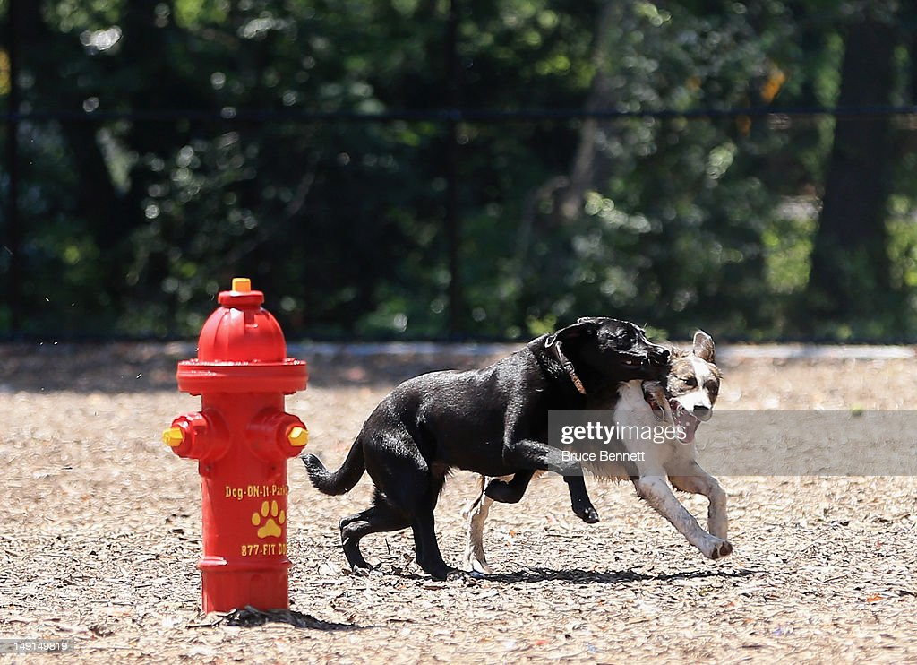 Dogs frolic at the Town of Oyster Bay dog park on July 22, 2012 in Massapequa, New York.