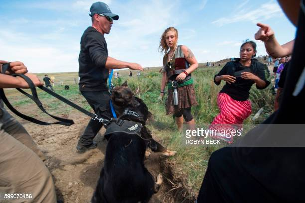 Dogs held by private security guards attack each other after protestors arrived to stop bulldozing of land for the Dakota Access Pipeline near Cannon...