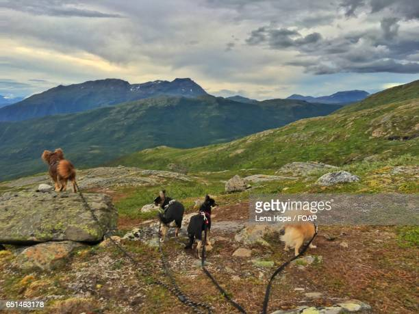 Dogs hiking at mountain