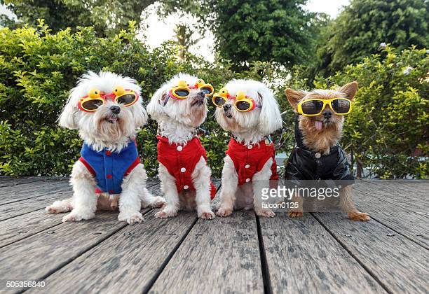 Dogs in costume and sun glasses