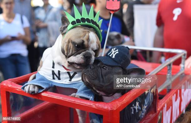 Dogs in costume are seen during the 27th Annual Tompkins Square Halloween Dog Parade in Tompkins Square Park in New York on October 21 2017 / AFP...
