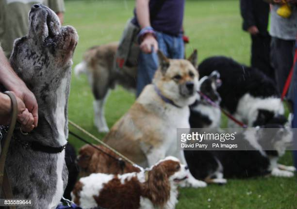 Dogs in Finsbury Park London broke the Guinness World Record for the loudest bark in history to mark the Disney DVD/Bluray release of Bolt the super...