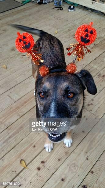 Dogs in halloween costume