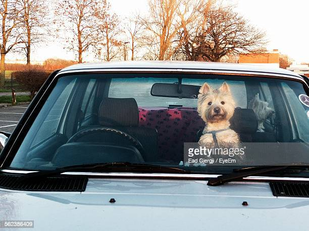 Dogs In Parked Cars Against Bare Trees