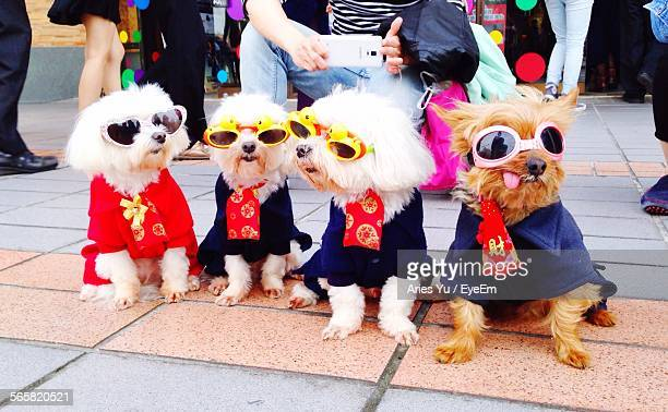 Dogs In Sunglasses On Footpath