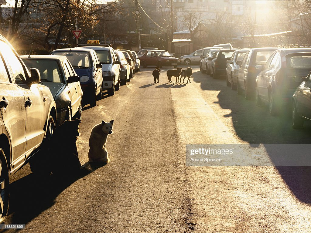 Dogs in the city : Stock Photo