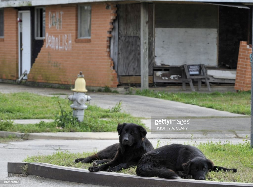 Dogs lay in the grass in front of vacant lot in the Lower Ninth Ward of New Orleans on February 5, 2013. The Ninth Ward suffered the worst damage from Hurricane Katrina that occured in 2005 after multiple breaches in the levees of at least four canals. As of March 2009, hundreds of houses have been rebuilt, and dozens of new homes have been constructed.
