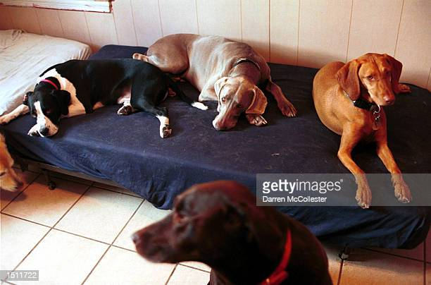 Dogs lounge on one of the many sofas at Pet Companions Inc August 17 2000 in Somerville MA Pet Companions Inc is the Boston areas first full service...