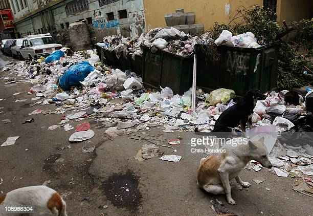 Dogs mill about near unemptied trash bins on a downtown street Feburary 10 2011 in Cairo Egypt Despite an attempt to return to normal many essential...