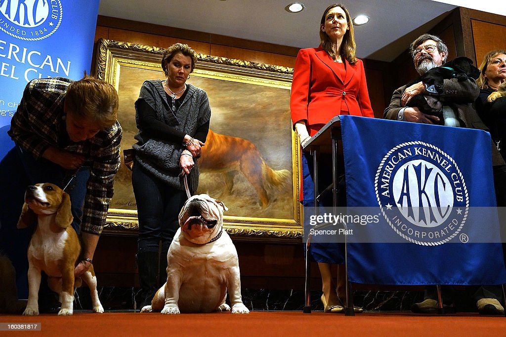 Dogs of various breeds stand during a news conference by the American Kennel Club to discuss the release of the club's annual list of the most popular dog breeds in the U.S., on January 30, 2013 in New York City. The club says that for the 22nd straight year the Labrador Retriever is the nation's most popular dog followed by the the German Shepherd.