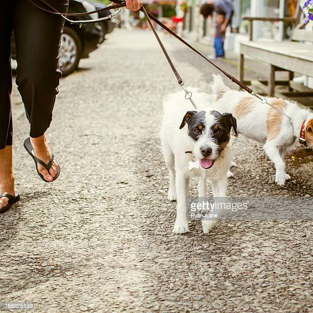 Dogs on a Walk in the City