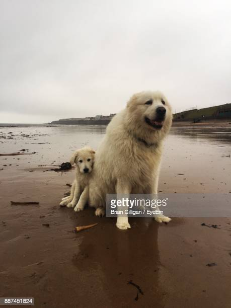 Dogs On Shore At Beach
