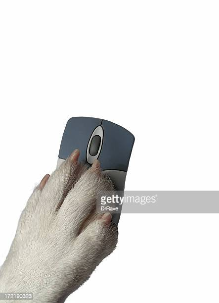 Dogs paw on mouse