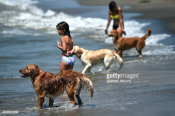 Dogs play at Baubeach in Maccarese near Rome on August 12 2014 At Beaubeach people accompanied by dogs can enjoy the beach during summertime AFP...