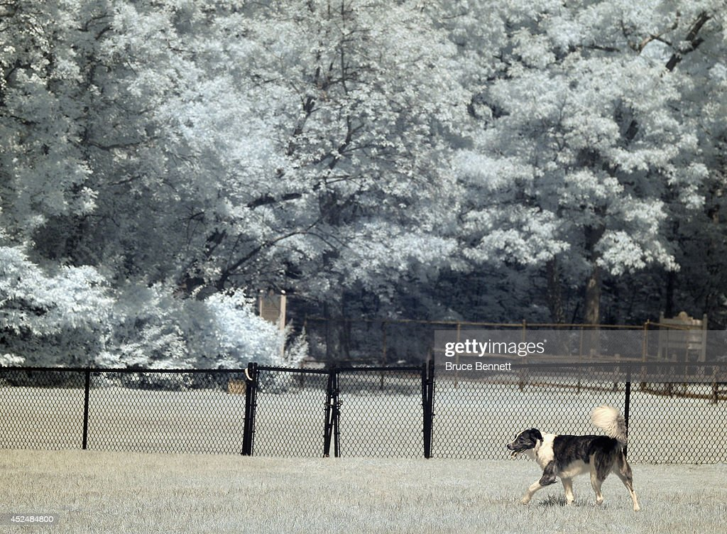 Dogs play in the West Hills Dog Park on July 21 2014 in Huntington New York
