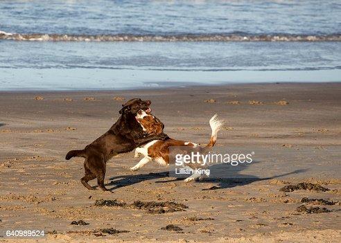 Dogs On Llandudno Beach