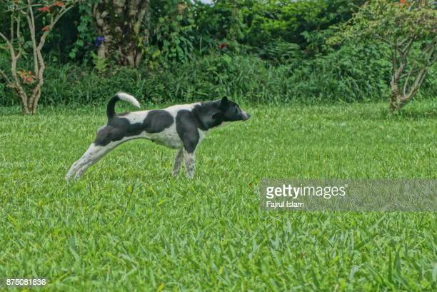 Dogs playing on the green grass