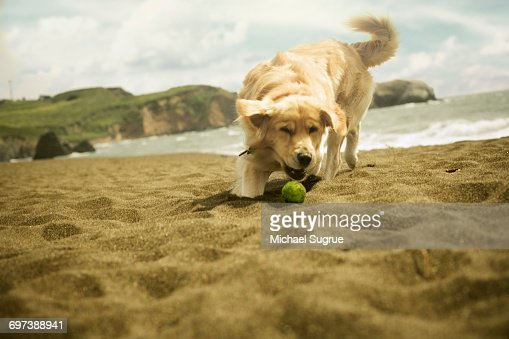 Dogs playing. : Stockfoto