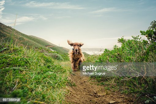 Dogs playing. : Foto stock