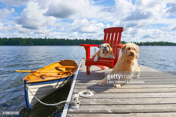 Dogs relaxing on wooden dock on lake