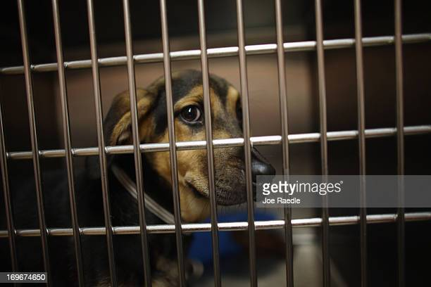 Dogs rescued from the ruins after a deadly tornado struck near Oklahoma City Oklahoma are seen as they are cared for at the Tri County Humane Society...