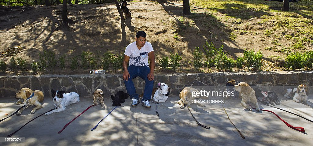 Dogs rest next to dog trainer Ramon Tellez at the Abraham Lincoln park in Mexico City on December 5, 2012. AFP PHOTO/OMAR TORRES
