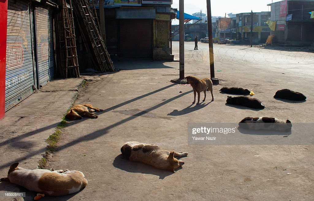 Dogs rest on a road as an Indian policeman stand guard during curfew on March 08, 2013 in Srinagar, the summer capital of Indian Administered Kashmir, India. Following the death of a youth by Indian army in north Kashmir tension has been high, with police and military using force when necessary to keep the peace.