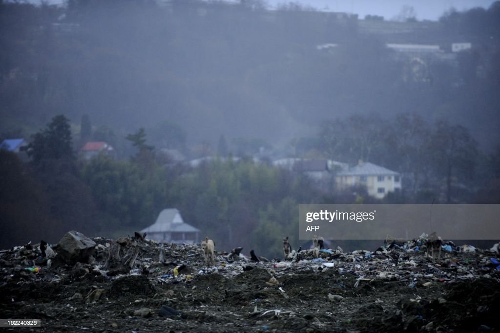 Dogs roam on top of a garbage at a dumping ground near the village of Gorny Vozdukh (Mountain Air) some 14 km outside of the Russian Black Sea resort of Sochi on February 21, 2013.