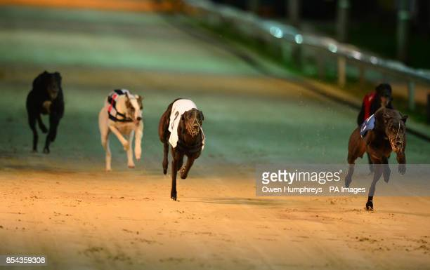 Dogs run in the Williamhillcom Great North Run Final