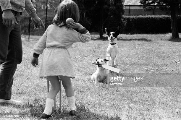 Dogs that 'work' during the weekend busking in London's West End are seen here playing cricket in the park in Dagenham with busker Don Crown's...
