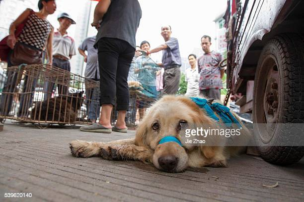 Dogs to be killed are fixed at a free market ahead of the Yulin Dog Eating Festival in Yulin city south China's Guangxi Zhuang Autonomous Region on...