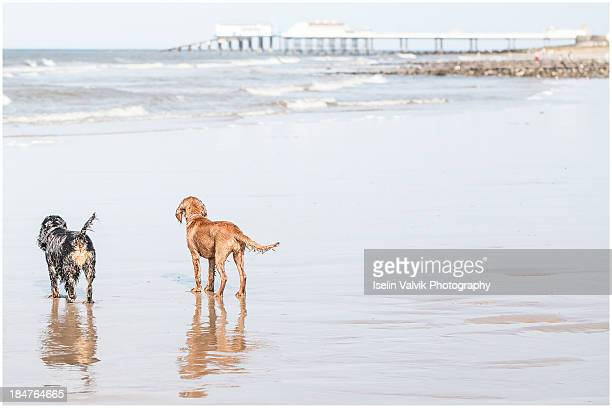Dogs Two On The Beach