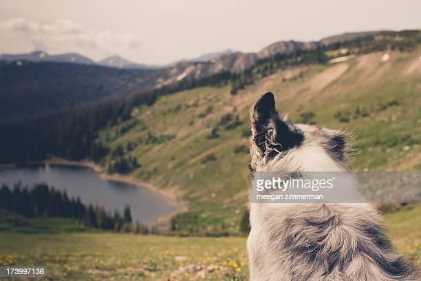 dog's view of alpine lake