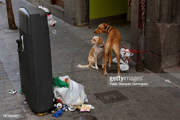 Dogs wait for their owner next to a bin overflowing with rubbish in the city centre on November 10 2013 in Madrid Spain Street cleaners garbage...