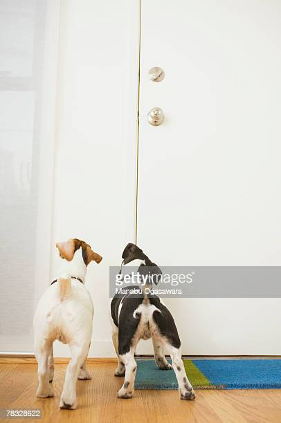 Dogs waiting at a door