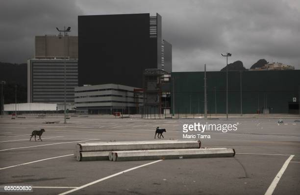 Dogs walk in the Olympic Park on March 18 2017 in Rio de Janeiro Brazil Seven months after the Rio hosted the first Olympic games in South America...