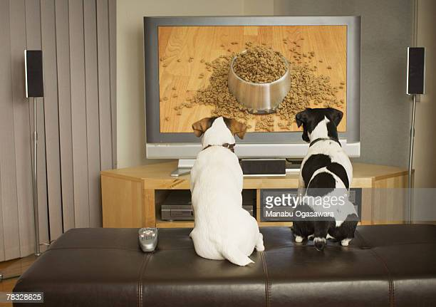 Dogs watching dog dish with food on TV